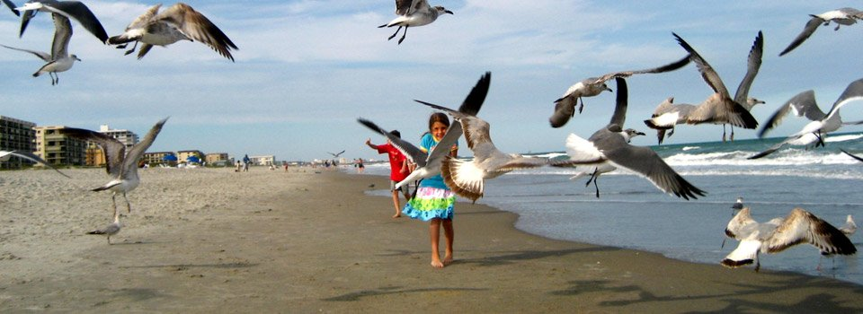 playing-with-sea-gulls